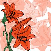 picture of lilly  - Elegant illustration of lilly flowers - JPG
