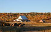 Fall Farmland