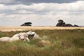 Cloudy Serengeti Plains