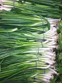 Fresh green onions stacked beautifully at a farmers market produce stand