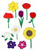 Ten Common Flowers Illustration
