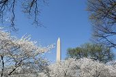 image of obelisk  - The Washington Memorial was built to commemorate George Washington (The first USA president) and it is the biggest obelisk and the world largest stone structure. ** Note: Visible grain at 100%, best at smaller sizes - JPG