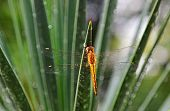 stock photo of dragonflies  - dragonfly sitting on a tree in a park morning - JPG