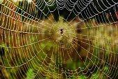 Spider in centre