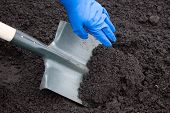 picture of spade  - Shovel on field digging hole with spade in field - JPG