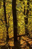 stock photo of serbia  - Golden forest light at autumn sunrise - JPG