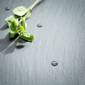 image of oregano  - A twig of fresh oregano on a dark stone background - JPG
