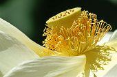 Macro Lotus Pod