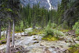 stock photo of inlet  - Inlet creek of Lake Moraine Alberta Canada  - JPG