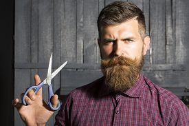 foto of long beard  - Portrait of creative man in violet checkered shirt with long beard and handlebar moustache holding sharp scissors looking forward standing on wooden wall background horizontal picture - JPG