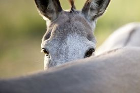 pic of headstrong  - funny donkey looks over his friends back - JPG