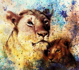 stock photo of lion  - lion mother and lion cub - JPG