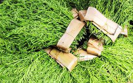 stock photo of om  - close up Acacia pennata or cha - JPG