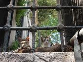 Cats From Orient