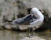 Bird F