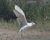 Bird Taking Flight F