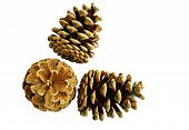 Pine Cones Seen From Above - Isolated