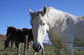 Hillside Horses