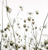 Summer Meadow Silhouettes Art Background