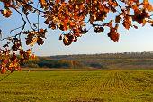 Sembrada con trigo de invierno campo. Temporada de otoño