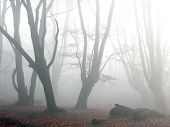 Mist, Epping Forest