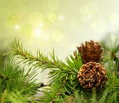 stock photo of cone  - Pine cones on branches with holiday background - JPG