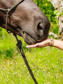 image of feeding horse  - Young woman girl feeding and taking care of brown horse - JPG