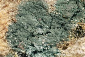 image of microscopic  - Green Bread Mold Microscopic Magnification - JPG