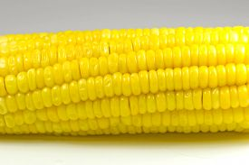 pic of corn cob close-up  - Close up of corn cob isolated on white background - JPG