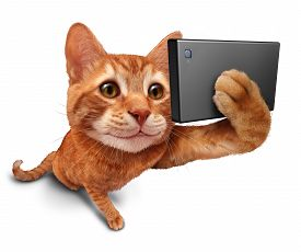 picture of selfie  - Selfie cat on a white background as a cute orange tabby kitty with a smile in forced perspective taking a selfy portrait picture with a smart phone or digital camera as funny and humorous social networking symbol - JPG