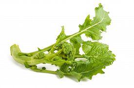 stock photo of turnip greens  - Fresh turnip greens isolated on white background - JPG