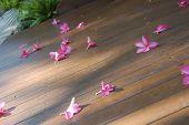 Petals On The Deck