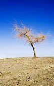 barren tree on barren land