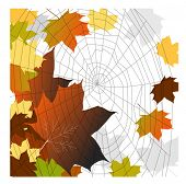 fall leaves spiderweb