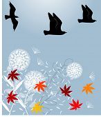 stock photo of caw  - fall scene with birds - JPG