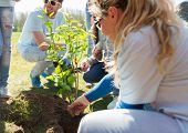 volunteering, charity, people and ecology concept - group of happy volunteers planting tree in park poster