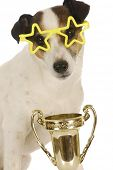 champion dog - jack russel terrier wearing star shaped glasses sitting with trophy