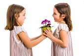 Identical Twin Girl Giving Viola Flower Pot To Her Sister. poster