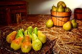 Green Pears In Rustic Basket At Old Country Farm