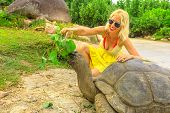 Elegant Caucasian Happy Tourist Woman Feeding A Male Of Aldabra Giant Tortoise, Aldabrachelys Gigant poster