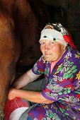 mujer pobre senior agricultor ordeñando la vaca