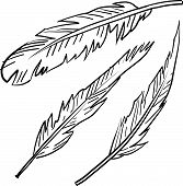 Feathers sketch