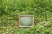 Viejo televisor entre las plantas verdes