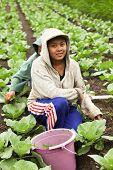 Young Farming Girls