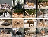 stock photo of chimp  - Collage of many different wild animals images - JPG