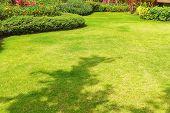 Path In The Garden, Landscape Design, Peaceful Garden, Green Garden And Lawn., Green Lawn, The Front poster