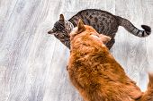 Cat And Dog Are Played Together. Cat And Dog Are Fighting. Gray Background. Cat And Dog Together. poster