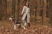 Pedigree Dog Concept. Husky Dog - Best Friends. Girl Enjoy Walk With Husky Dog. Siberian Husky Favor poster