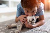 Adorable Little Child Playing With Grey British Shorthair On Carpet At Home poster