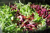 Gorgeous Microgreens